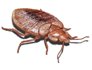 West Oaks Pest Control - Bed Bugs - 805-642-6077