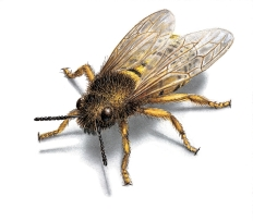 West Oaks Pest Control - Bees - 805-642-6077
