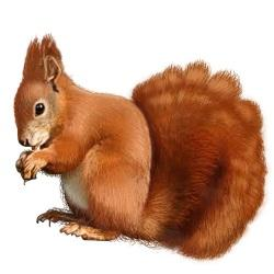 West Oaks Pest Control - Squirrels - 805-642-6077