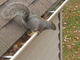 squirrel_removal_mississauga -